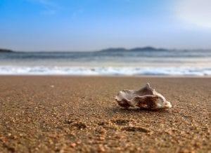 A shell on the beach